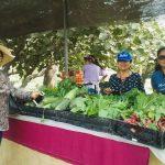 INFOVIDA| Funcionarios/as de Lima Sur fortalecen sus conocimientos en agricultura urbana en la Universidad Agraria de La Molina