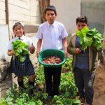 INFOVIDA | Biohuertos escolares en Lima Sur: cosechando esfuerzos para el cuidado del ambiente