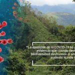 FOVIDA OPINA| Día Mundial del Ambiente en tiempos de pandemia:  Momento para repensar nuestras acciones ambientales