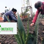 Colectivo de Mujeres trabajando frente al cambio climático