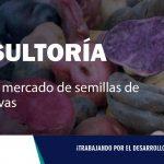 CONSULTORÍA| Estudio de mercado de semillas de papas nativas